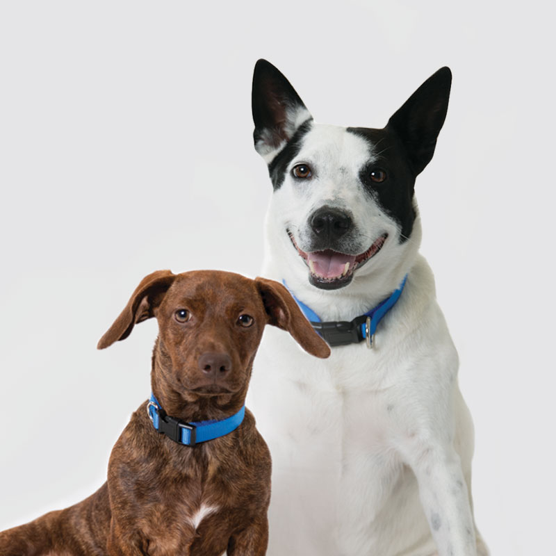 dogs team headshot